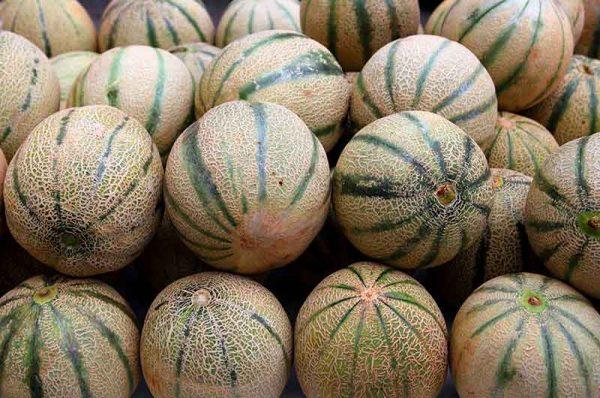 Melone-Charantias