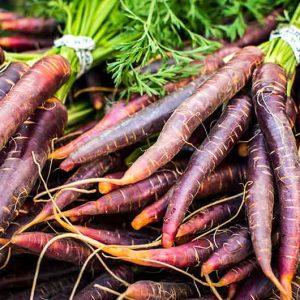 Karotten-Violett